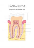 Tööleht: Hamba ehitus