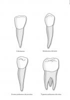 Poster: Erinevad hambatüübid
