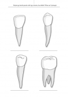 Tööleht: Erinevad hambatüübid